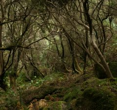 forest-2037510_1920